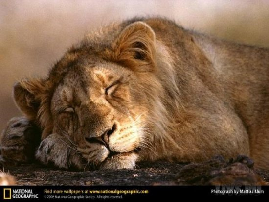 National Geographic лучшие