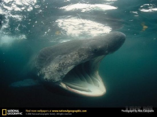 National Geographic ������