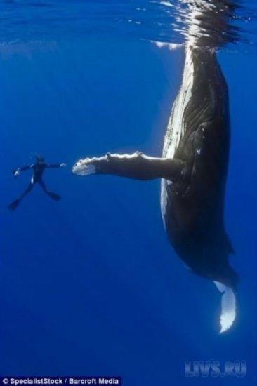 Танец с китом
