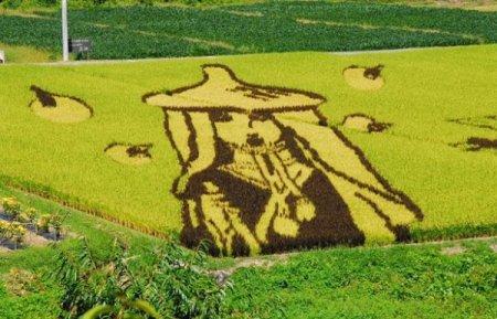 Картинки на рисовых полях