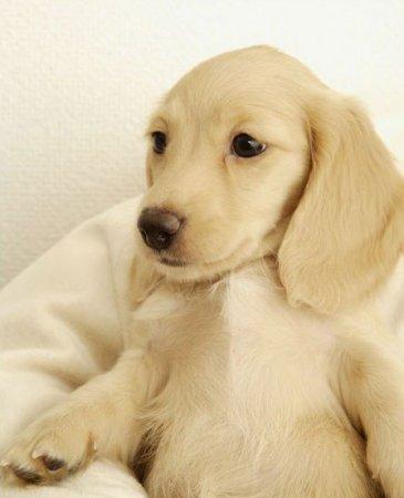 Симпатичные щенки