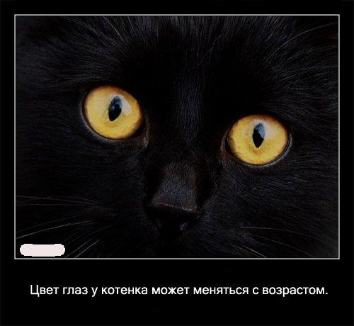 Кошки: фото и факты