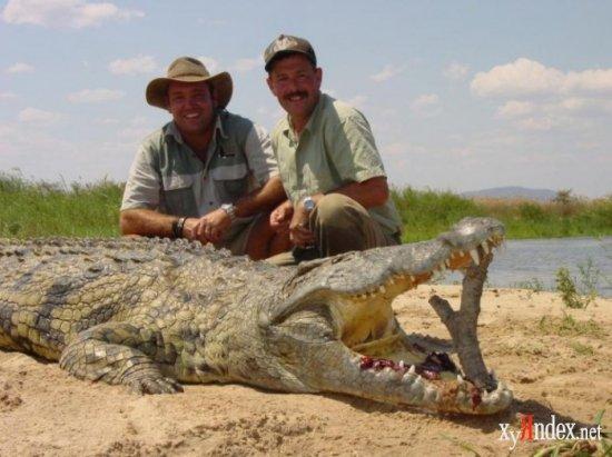 Что ел крокодил?