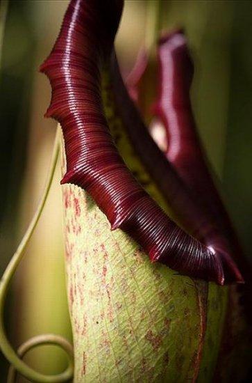 Растения-убийцы