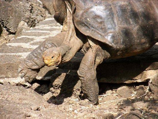 Самая знаменитая черепаха в мире