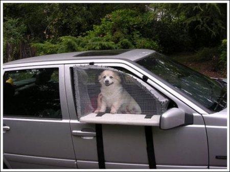 Девайс собачке на радость!