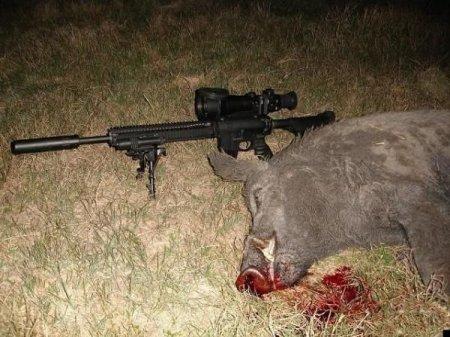 Охота на кабанов