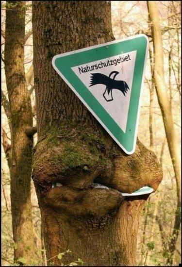 Деревья атакуют!