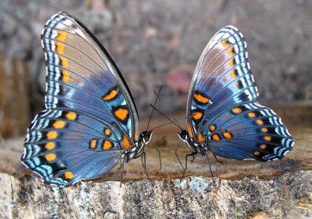 Топ 10 фактов про бабочек