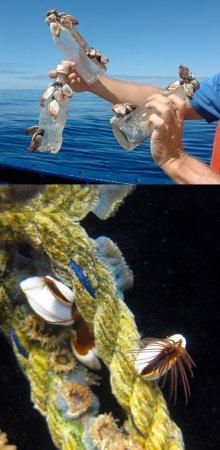 Океанский мусорный водоворот ошарашил учёных масштабом