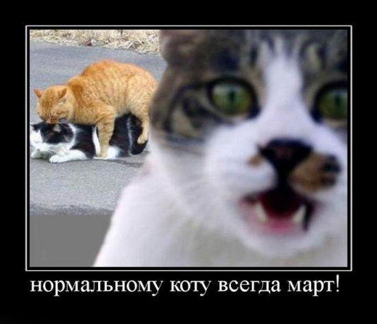 Веселые картинки-4