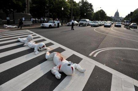 Протесты PETA в Вашингтоне
