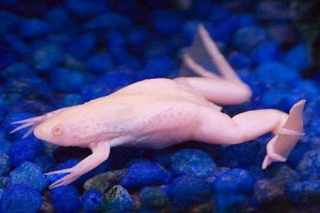 Симпатичные животные-альбиносы