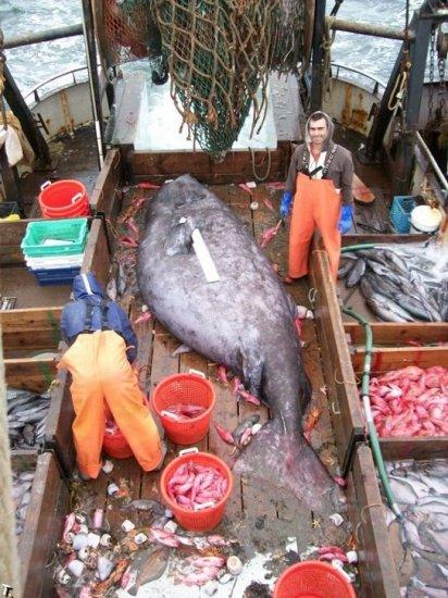 Рыбаки поймали рыбку