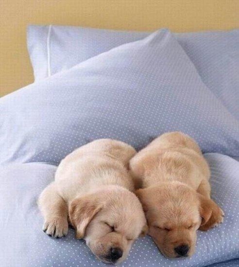Пора спать