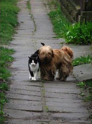 Ждет друга