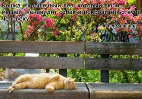 Знаменитые люди - о кошках