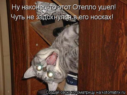 Котоматрицы-6