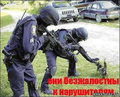 Наша доблестная милиция
