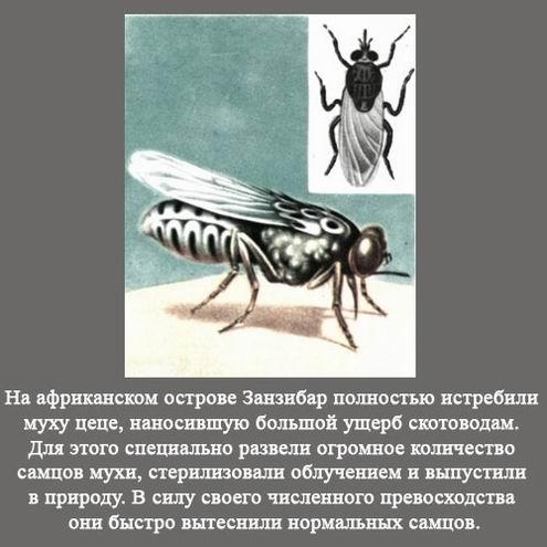 Интересные факты  (3)