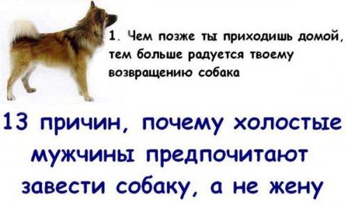 13 причин или Снова о собаках