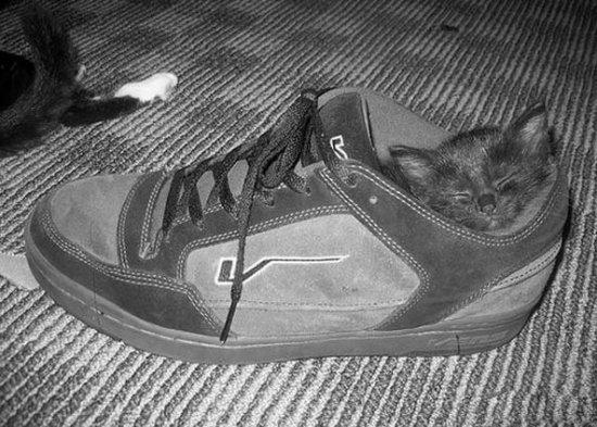 Кошки, коты и котята