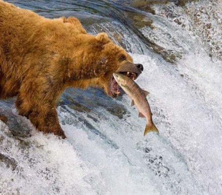 Рыбаки в шубах