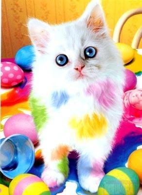 Яркие краски!