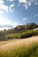 Австрия – страна виноделия