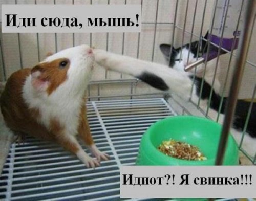 """""""Позитив с хвостиком"""" - 5"""