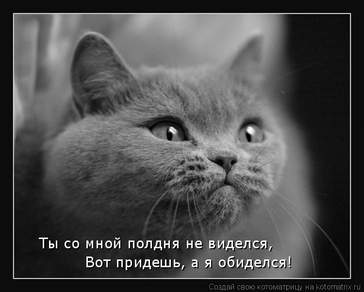 Котоматрицы-7