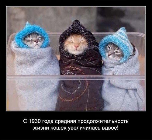 Интересные факты (О кошках)