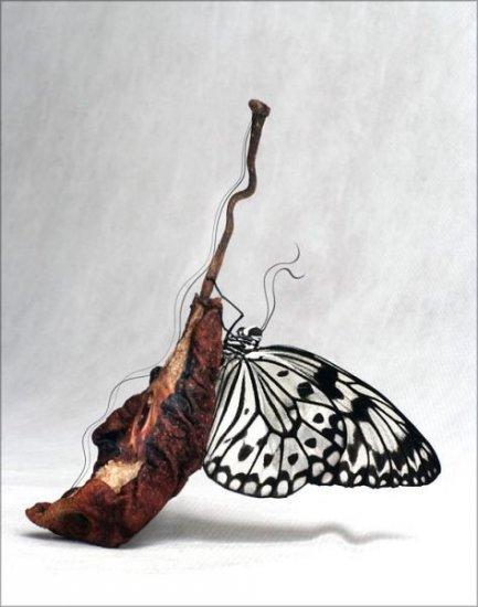 Сумашедший фото арт от Брушши