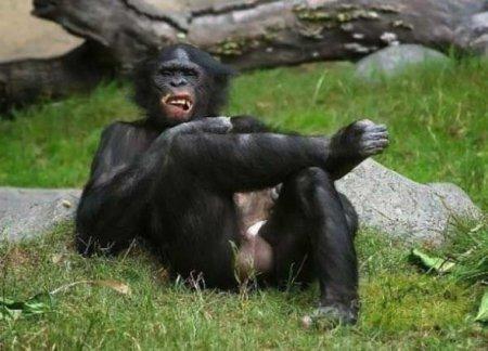 Этот забавный зоомир