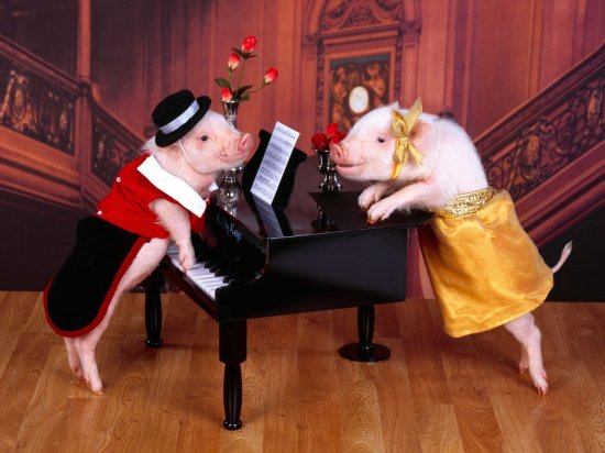 Свинские обои
