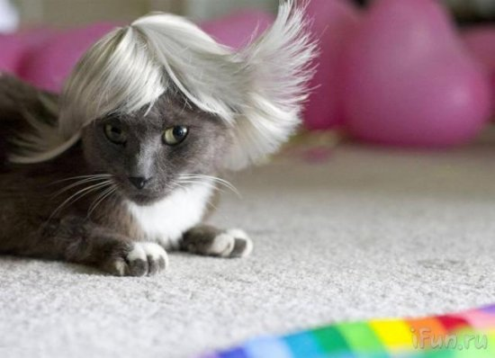 Кошачий гламур