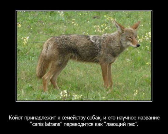 Интересные факты (О животных)