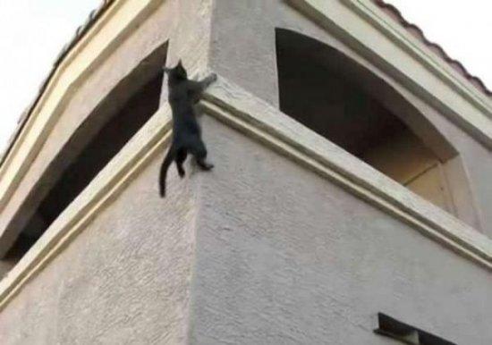 Кот-паук