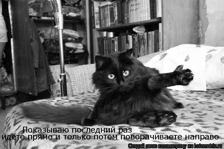 Котоматрицы-8