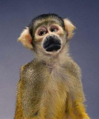 И подумайте, наконец, о белой обезьяне!