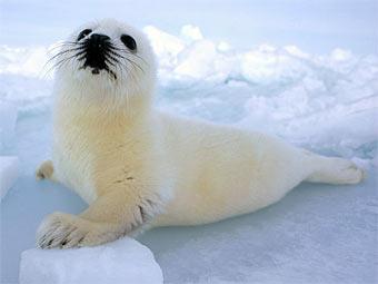 Британцы нашли в саду радостного детеныша тюленя