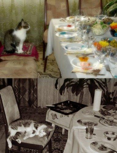 Забавные фото с животными