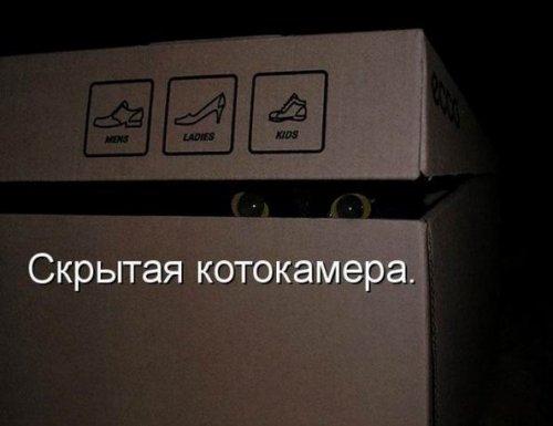 ����-�������