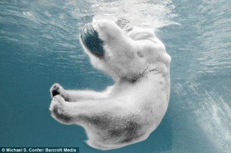 Превед белый медвед