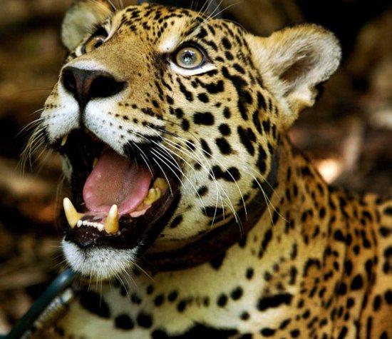 Боливийский центр спасения животных