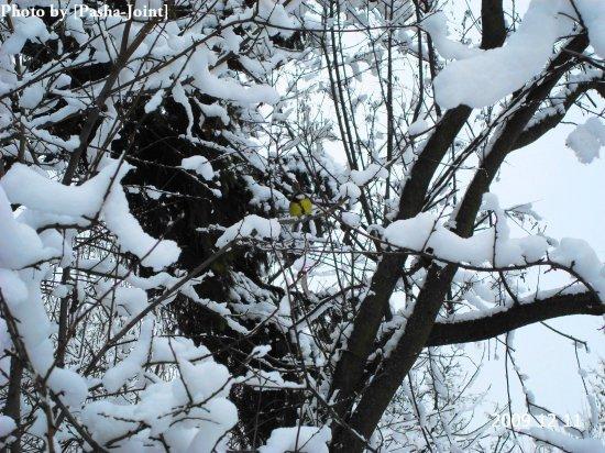 Лошицкий Парк. Минск. Зима. Фото (50 шт) by [Pasha-Joint]