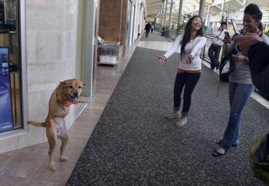 Двуногая собака Вера