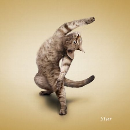 The 'Yoga Cats' 2010 Calendar
