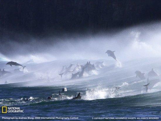 17 самых красивых фото от National Geographic