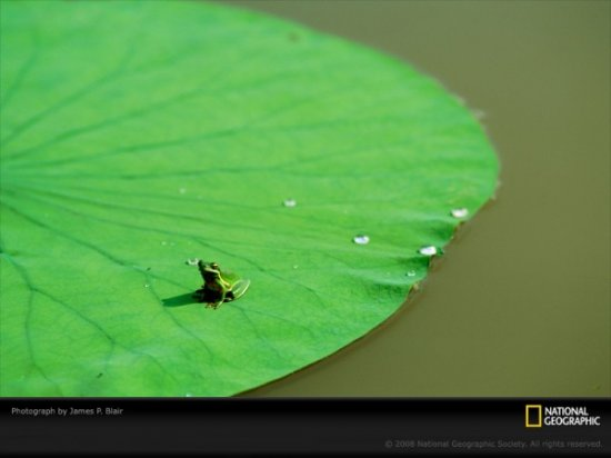 17 ����� �������� ���� �� National Geographic